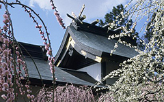Yuki Shrine, Tsu City, Japan, 2002; color slide film