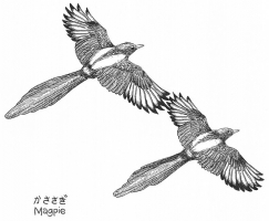 Magpie for Shinya and Addie, 2010; Ink on paper